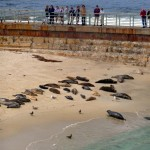 Seals on Children's Pool Beach