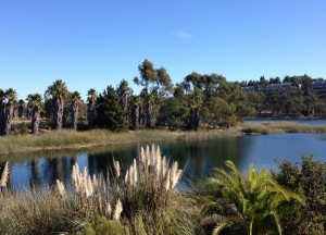 Scripps_Ranch_-_Lake_Miramar_-_Lush_Inlet
